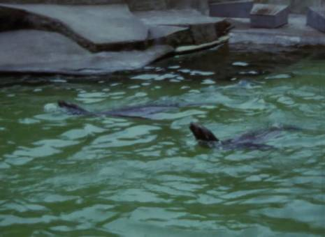 Besuch im Zoologischen Garten