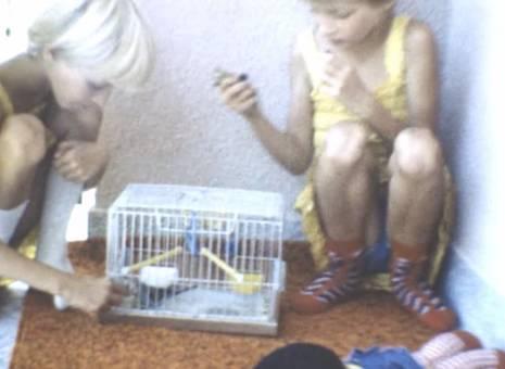 Vogelmutti
