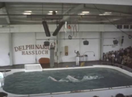 Delfinschau