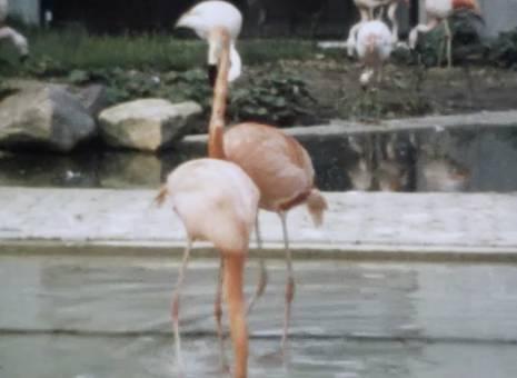 Ausflug in den Zoo