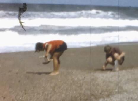 Drachenfliegen und Muscheln