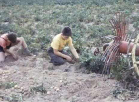 Kinder und Landarbeit