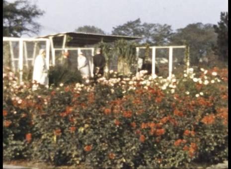Bundesgartenschau 1957 in Köln