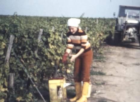 Auf den Weinfeldern