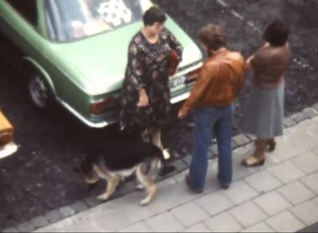 Schäferhund am Parkplatz
