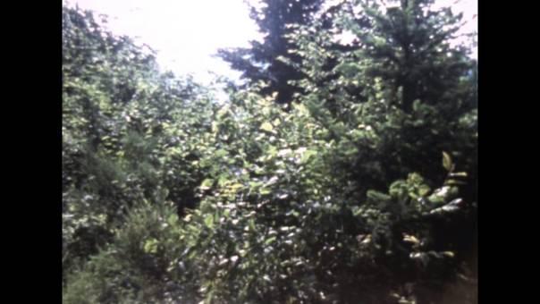 Das Gründelbachtal