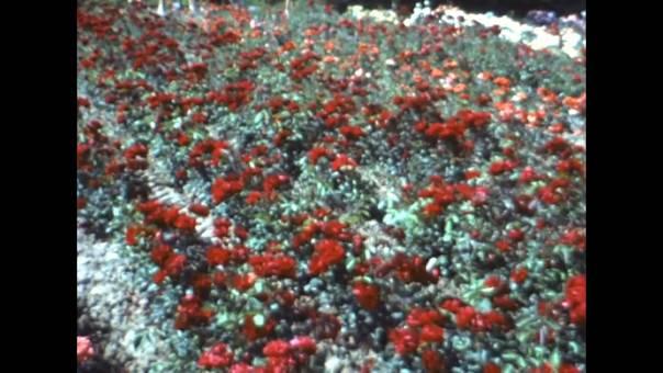 Trierer Blumentage
