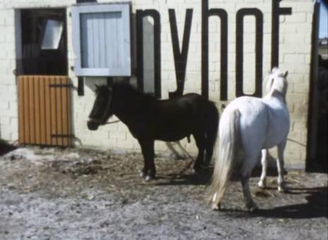 Ponyhof Bensersiel
