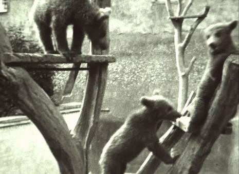 Bärenbesuch
